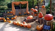 Pumpkin, Vegetables, Outdoor, Outdoors, Pumpkins, Vegetable Recipes, Outdoor Games, Squash, The Great Outdoors
