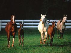 trawa, Koń, wybieg