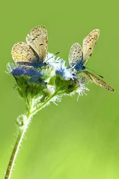 Beautiful butterflies. .