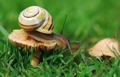 Here I go! Banded Snail on Toadstool | Flickr - Photo Sharing!
