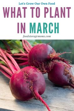 Edible garden 92675704821187042 - Are you wondering what to plant in March? I can hardly wait to get my hands in the soil, what about you? Are you ready to grow your own food? You can do it, I promise! Source by foodstoragemoms