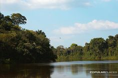 PopularPlaces Suriname. Experience the Canopy Zip line above the Suriname River at Bergendal Eco & Cultural River Resort !!  It's a great Adventure !! #suriname #popularplaces #caribbean #beautiful #amazing  #travel #places #nature #landscape #beautifuldestinations  #beautifulplaces #bestplacetogo #destinations  #populardestinations  #naturelover #rainforest #jungle #amazone #southamerica
