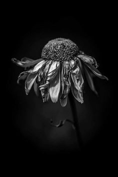 46 ideas for flowers art gcse artists 46 ideas for flowers art gcse artists The post 46 ideas for flowers art gcse artists appeared first on Fotografie. Still Life Photography, Nature Photography, Flower Photography, White Photography, Decay Art, Growth And Decay, A Level Art, Gcse Art, Still Life
