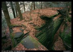 Picture/Photo: Sandstone cracks, moss, fallen leaves, and trees with bare roots, The Ledges. Beautiful Space, Beautiful World, Amazing Photography, Landscape Photography, Autumn Leaves, Fallen Leaves, Us National Parks, Day Hike, Natural World