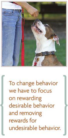 Dr. Sophia Yin, DVM, MS, The Art and Science of Animal Behavior
