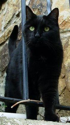 krásna čierna mačička fucked Tan Teen Sex