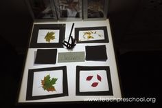 Fall leaves at the light table