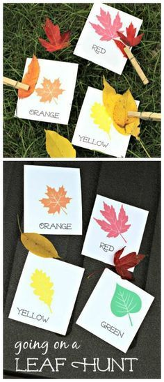 Go on a Leaf Hunt with these free printable cards! Great outdoor Fall activity for to use with preschool, kindergarten and elementary age kids for color matching, leaf type and creative hands-on math activities included! Gross Motor Activities, Craft Activities, Toddler Activities, Classroom Activities, Color Activities For Preschoolers, Math Activities For Toddlers, Seasons Activities, Autumn Activities For Kids, Autumn Art