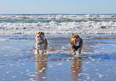 Pooch-friendly beaches: 10 getaways for the dog days of summer