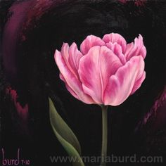 Foxtrot Tulip  Original Oil Painting on Wood by maria burd  (Art, framed, flower, pink, black, botanical, floral, decorative)
