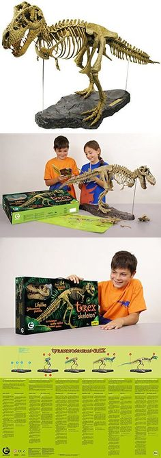Animals and Nature 31744: Geoworld T-Rex Skeleton -> BUY IT NOW ONLY: $50.54 on eBay!