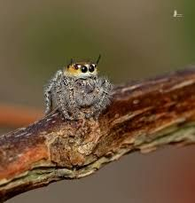 Jumping Spider, Spiders, Art Reference, Creepy, Boards, Pets, Nature, Animals, Sup Boards
