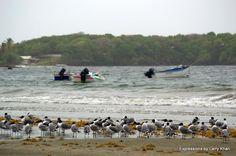 Birds await the fishermen..Tobago