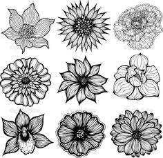 Cosmos flowers flowers drawings vector stock vector drawing black and white pictures of flowers to print free google search mightylinksfo