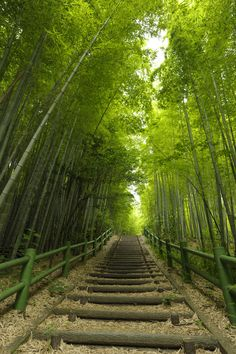 Soul Mission another recent astral destination: Bamboo Path - Makinogaike Greens, Nagoya, Aichi, Japan Aichi, Gifu, Nagoya, Asia Travel, Japan Travel, Japan Trip, Kyoto, Oh The Places You'll Go, Places To Visit