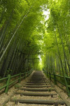 Bamboo Path - Makinogaike Greens, Nagoya, #Aichi, #Japan