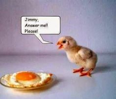Funny Chicken Pictures Pics of Chicks) Funny Animal Photos, Funny Photos, Funny Animals, Funniest Animals, Funniest Pictures, Animal Jokes, Funny Chicken Pictures, Chicken Humor, Funny Cute