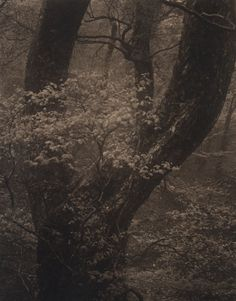 From Silent Respirations of Forests series: Mt. Tsurugi n.23, Takeshi Shikama, 2010.