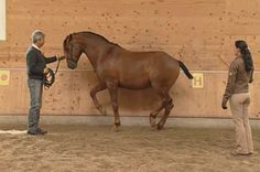 A very-well executed piaffe. Note the poll is the highest point and the haunches are lowered and engaged. Also, no bit, and very subtle cue. Anja Beran is one of my favorite classical dressage/horsemanship trainers