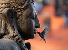 Buddha and Bird