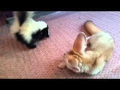 Baby Fennec Fox and Skunk Growing Up Together - Neatorama