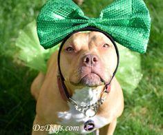 DZ's Adventures: Happy St. Patricks Day!! Hiking Dogs, Happy St Patricks Day, Dog Treat Recipes, Dog Treats, Dog Training, Pitbulls, Cute Animals, Adventure, Pets