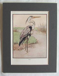 • Original Antique bookplate/print of one of FMB Blaikies beautiful Art Nouveau style wildlife illustrations • Printed c.1908 • Beautifully