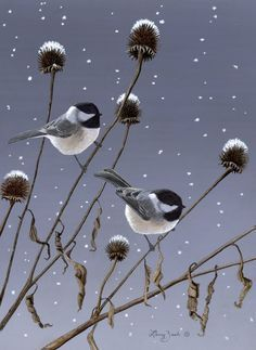 Winter Pair Black Capped Chickadees Larry Zach Wildlife Art - The Black Capped Chickadee Is A Common Visitor At Bird Feeders They Enjoy Sunflower Seeds And Suet With A Little Training They Can Be Taught To Feed Out Of A Persons Hand Here Is Small Birds, Little Birds, Pretty Birds, Beautiful Birds, Black Capped Chickadee, Purple Bird, Backyard Birds, Bird Illustration, Illustrations