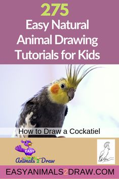 Learn how to draw an amazing Cockatiel with this easy and inspirational step-by-step drawing tutorial for kids of all ages! Start by drawing the head. Draw a curved line in graphite pencil. to draw animals tutorials birds step by step Drawing Birds, Dinosaur Drawing, Nature Drawing, Cat Drawing, Fish Drawings, Horse Drawings, Animal Drawings, Easy Animals, Draw Animals