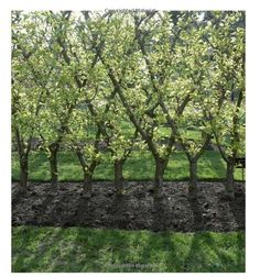 Landscaping With Fruit: Strawberry ground covers, blueberry hedges, grape arbors, and 39 other luscious fruits to make your yard an edible paradise. (A Homeowners Guide): Lee Reich: 9781603420914: Amazon.com: Books