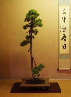 一柳会盆栽展示会 : 風流盆栽
