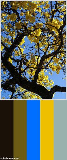 Mateus+Zaccaro+Flores+Brasileiras+Ipe+(5)+Color+Scheme