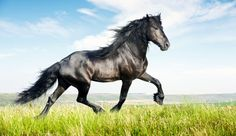 It's the year of the horse! How will this affect our yoga practice?