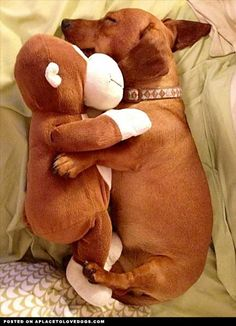 I don't know what's cuter, the dog or the fact that he sleeps with a doll like that <3