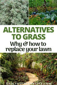 Grass alternatives can save you time, money, and water while reducing greenhouse gas emissions. Here's why to consider converting some or all of your lawn to these eco-friendly grass alternatives. #grassalternatives #ecologicallandscaping #lawnalternatives #ecofriendly #gardening #ecofriendlyyard Grass Alternative, Green Living Tips, Energy Conservation, Lawn Care, Renewable Energy, Sustainable Living, Natural Living, Permaculture, Backyards