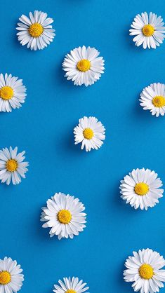 Awesome free wallpaper from daisy wallpaper, accent wallpape Frühling Wallpaper, Flower Background Wallpaper, Flower Phone Wallpaper, Phone Screen Wallpaper, Sunflower Wallpaper, Pastel Wallpaper, Wallpaper Quotes, Simple Wallpapers, Cute Wallpaper Backgrounds