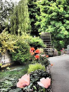 veules les roses Normandie France