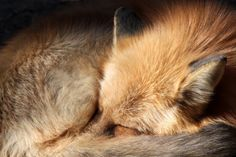 jaws-and-claws:  Against the Cold by *Jack-13
