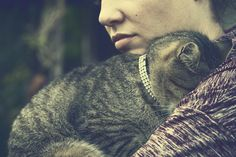 Collier et médaille ou laisse et harnais ? Quelles précautions prendre si mon chat sort de la maison? #chat #chaton #tabby #tigre #chattigre #strass #diamant