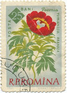 1961 Romanian Stamp - Peony by alexjacque, via Flickr