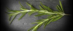 ROSEMARY FROM A TO Z: 26 THINGS YOU DIDN'T KNOW ABOUT ROSEMARY via FineDiningLovers.com