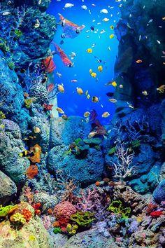 Praying Mantis Discover 7 Reasons Why You Should Visit the Baltimore National Aquarium Under the sea adventure Under The Water, Underwater Animals, Underwater Life, Underwater Tattoo, Underwater Caves, Aquariums, Beautiful Sea Creatures, Animals Beautiful, Ocean Wallpaper