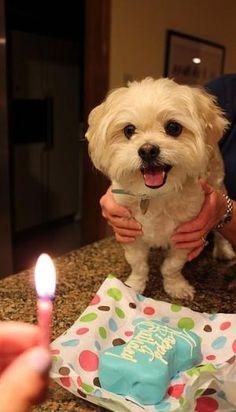 Birthday!-awww, he looks so happy!! by whitney