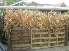 Create a walkway with corn stalks and pallets. Eerie Manor, creeping to life Halloween Maze, Halloween Haunted Houses, Outdoor Halloween, Halloween Projects, Halloween Themes, Fall Halloween, Halloween Decorations, Halloween Party, Pokemon Halloween