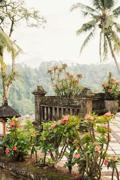 garden with a view #indonesia #wepworld #volunteering