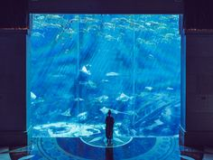Zaczarowany Dubaj i nocleg w Hotelu Atlantis the Palm W Hotel, Atlantis, Aquarium, Palm, Goldfish Bowl, Aquarium Fish Tank, Aquarius, Hand Prints, Fish Tank