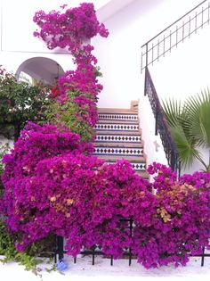 Costa Blanca, Spain - We love real estate - www.casascostablanca.nl  I want to have bougainvilleas growing around a patio!