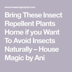 Bring These ​Insect Repellent Plants Home if you Want To Avoid Insects Naturally – House Magic by Ani
