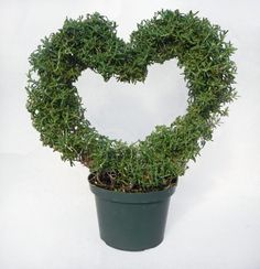 Herb Heart Topiary