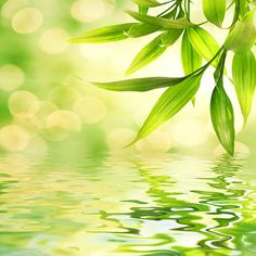 Zen in nature - ripples leaves Wallpaper Roll, Photo Wallpaper, Terra Verde, Painting Prints, Canvas Prints, Bamboo Leaves, Gras, Feng Shui, Shades Of Green
